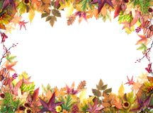 Autumn Frame of Leaves, Berries, Flowers and Pumpkins Royalty Free Stock Photo