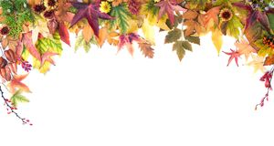 Autumn Frame of Leaves, Berries, Flowers and Pumpkins Stock Images