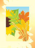 Autumn frame with leaves, sunflower and wheat ears Royalty Free Stock Photos