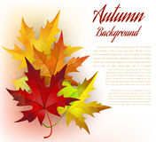Autumn Frame With Leaves Royalty Free Stock Photography