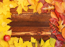 Autumn frame with leaves Royalty Free Stock Photos
