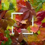 Autumn frame made of leaves with white frame. Flat lay, top view. Stock Photography