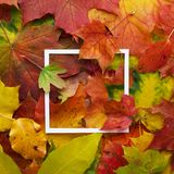 Autumn frame made of leaves with white frame. Flat lay, top view. Royalty Free Stock Images