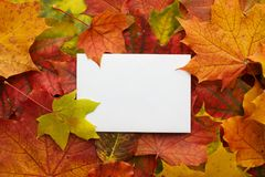 Autumn frame made of leaves with white frame. Flat lay, top view. Stock Photos
