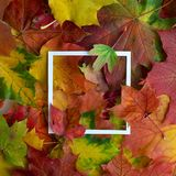 Autumn frame made of leaves with white frame. Flat lay, top view. Royalty Free Stock Photos