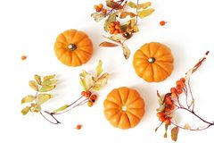 Autumn frame made of little orange pumpkins, rowanberries and colorful leaves isolated on white table background. Fall