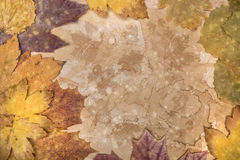 Autumn frame made from natural materials Royalty Free Stock Photos