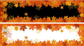 Autumn frame: maple leaf. Stock Images