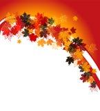 Autumn frame: maple leaf. Stock Image