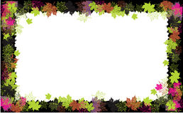 Autumn frame: maple leaf. Royalty Free Stock Photography