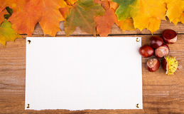 Autumn frame from maple leaves and chestnut Stock Photo