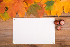 Autumn frame from maple leaves and chestnut Stock Images