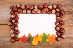 Autumn frame from maple leaves and chestnut Royalty Free Stock Images