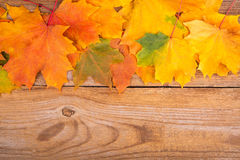 Autumn frame from maple leaves Stock Photography