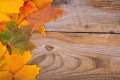 Autumn frame from maple leaves Royalty Free Stock Photos