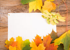 Autumn frame from maple leaves Royalty Free Stock Photography
