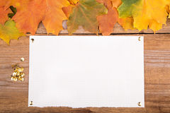 Autumn frame from maple leaves and paper Stock Images