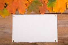 Autumn frame from maple leaves and paper Stock Image