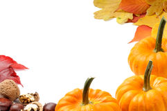 Autumn frame with pumpkins Royalty Free Stock Photos