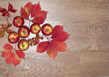 Autumn frame of red leaves and apples parthenocissus Royalty Free Stock Photos