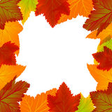 Autumn frame. Seamless autumn frame with red, yellow and brown leaves Royalty Free Stock Photo