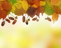 Autumn frame - seasonal background Royalty Free Stock Image
