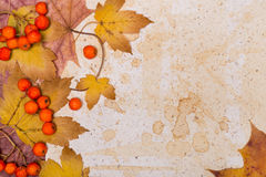 Autumn frame, space Royalty Free Stock Photo