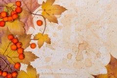 Autumn frame, space Royalty Free Stock Photo