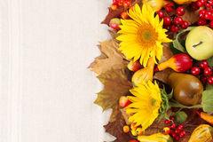 Autumn frame with sunflowers, fruits and pumpkins Stock Image