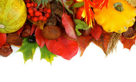Autumn Frame. Frame of Various Autumn Leafs, Vegetables, Berries, Mushrooms, Flowers and Nuts  on white background. Top View Stock Image