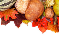 Autumn Frame. Frame of Various Autumn Leafs, Vegetables, Berries, Porcini Mushroom and Nuts isolated on white background. Horizontal View Royalty Free Stock Photo