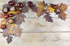 Autumn Frame von den Kastanien und von Brown-Blättern auf hölzernem Hintergrund Lizenzfreies Stockbild