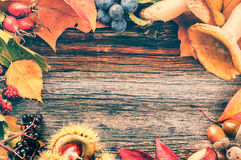 Autumn frame with wild berries and mushrooms on wooden backgroun Stock Images