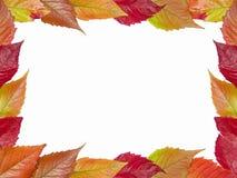 Autumn framework. Framework of fall leaves stock image