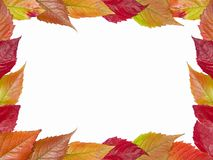 Autumn framework stock image