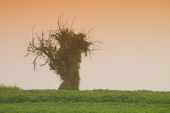Lone dead tree Stock Image