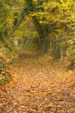 Autumn path with leaves Stock Image