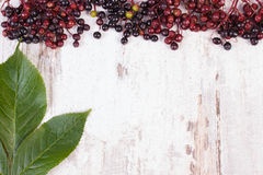 Autumn fresh elderberry with leaf and copy space for text on old wooden background Stock Images