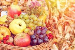 Autumn fresh fruits in wicker basket royalty free stock photos