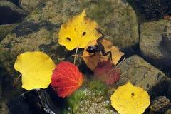 Autumn frog. Royalty Free Stock Photo