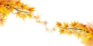 Autumn fronds Stock Photo