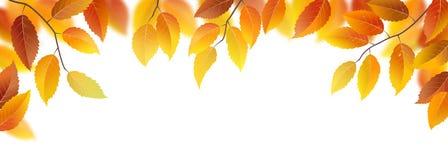 Autumn fronds Royalty Free Stock Photo