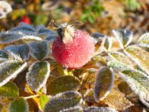 Autumn frost Royalty Free Stock Images