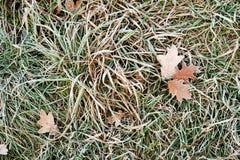 Autumn frost Stock Photo