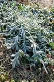 Autumn frost on plant, background Stock Image
