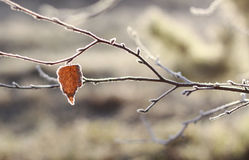 Autumn frost Stock Images