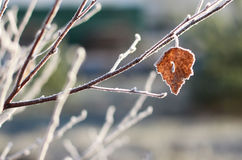 Autumn frost. A single leaf covered in frost Royalty Free Stock Image