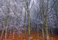 Autumn frost on trees Stock Photos