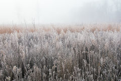 Autumn, Frosted Tall Grass Prairie. Frosted autumn tall grass prairie in fog, Fort Custer State Park, Michigan, USA Stock Images