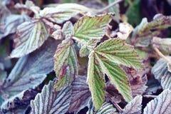 Autumn frosty morning Stock Image
